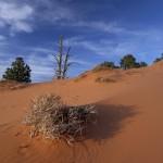 sand dunes bush